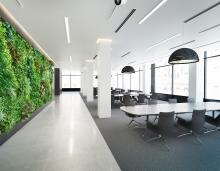 Green wall inside office